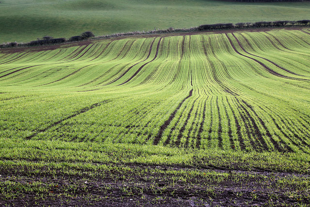 Arable farmland at Redpath