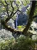 SN7477 : Mynach Falls Pontarfynach by norman griffin