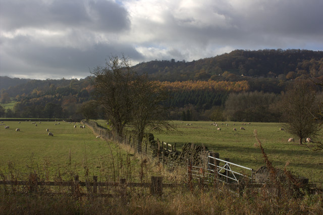 Fields and Hillcar Wood from the Peak Rail path