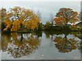 SK7499 : Late Autumn colour reflected in the village pond : Week 47