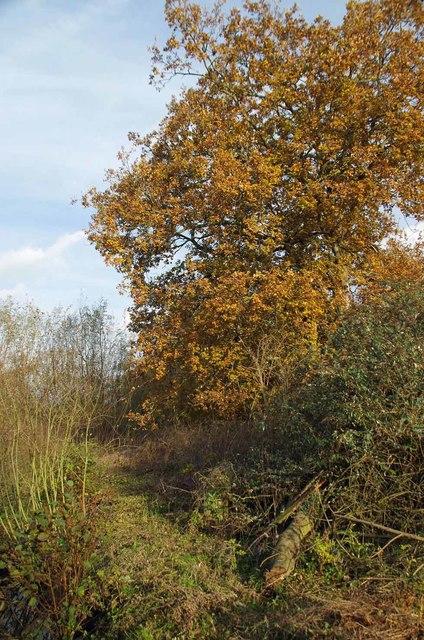 Path Beside Tenpenny Brook