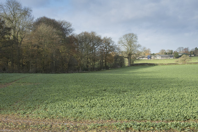 Looking along the edge of a copse