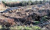 J3630 : Log piles below Drinnahilly by Eric Jones