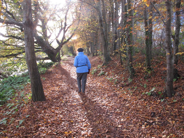 Walking by the River Dart in autumn, Totnes
