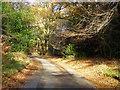 SP8400 : A woodland lane by Robin Webster