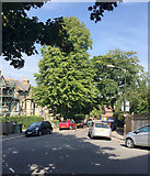 TQ3370 : Northwest and downhill on Jasper Road, Crystal Palace, south London by Robin Stott