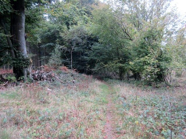 Monarch's Way in Selhurst Park