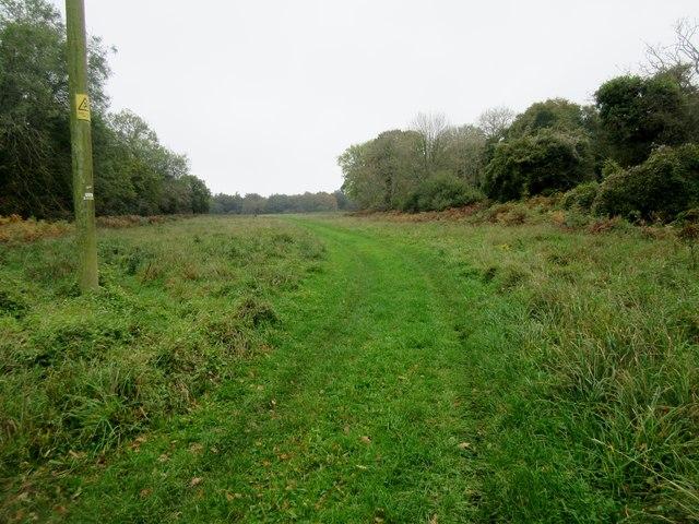 Track to Selhurstpark Road
