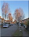 TL4756 : Perne Avenue in November by John Sutton