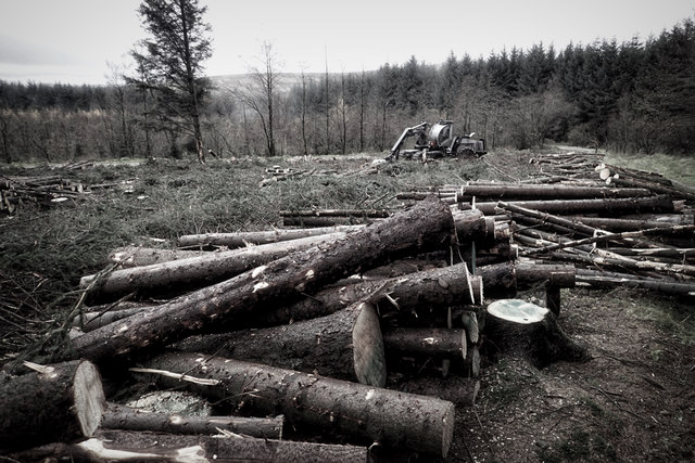 Recent felling, Gisburn Forest