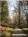 SE5976 : Track in Park Wood by Gordon Hatton