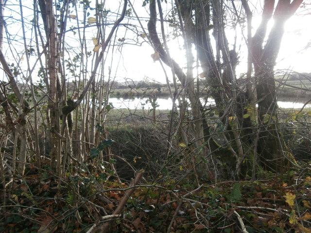 Pond beside Heol Ddu, Llantrisant