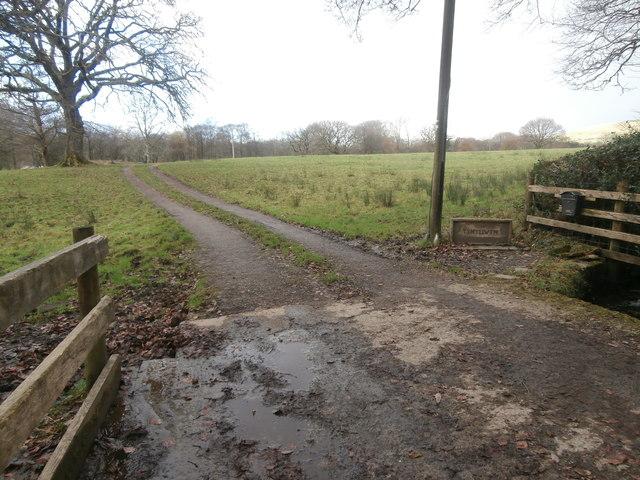 Track to Ty'n-y-llwyn Farm