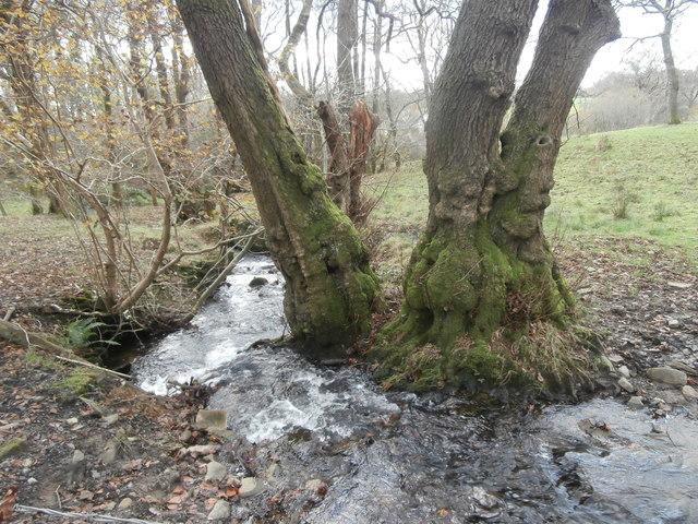 Stream beside the track to Ty'n-y-llwyn Farm