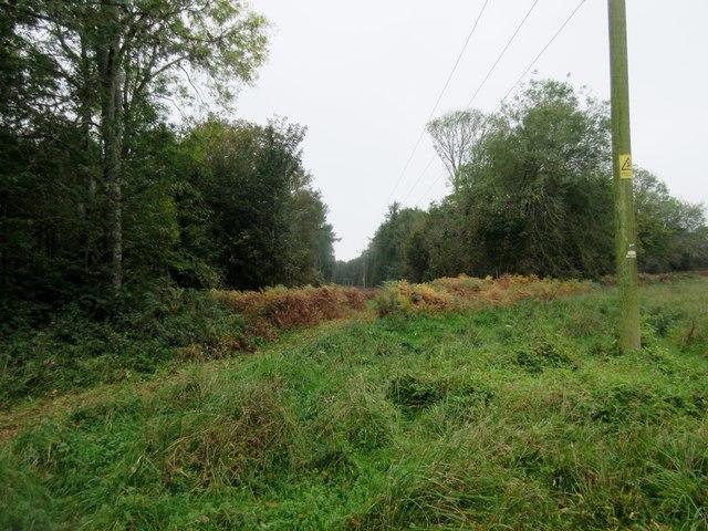 Overhead power lines in Selhurst Park