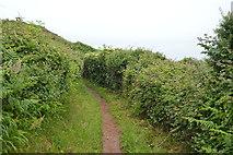 SX4949 : South West Coast Path by N Chadwick