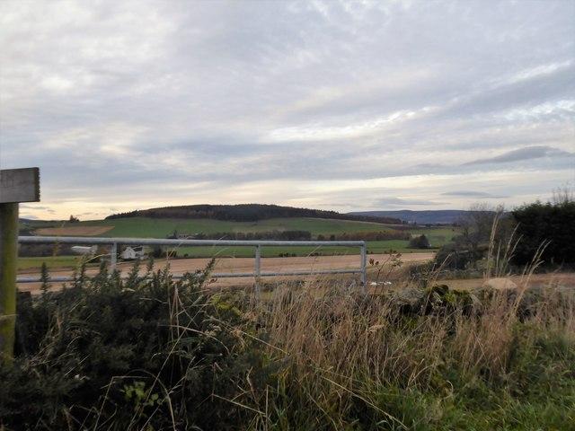 View towards Cairnshee Wood