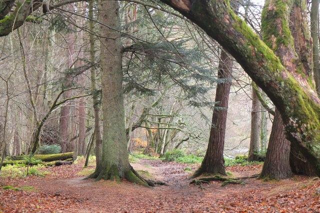 South Park Wood, Peebles