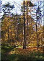 TL7980 : Parc Path by Gordon Griffiths
