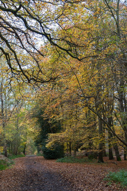 Trent Park near Camlet Moat