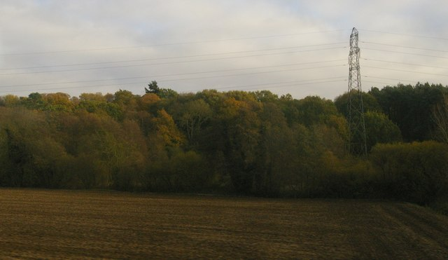 Buxton Wood and pylon line from the railway