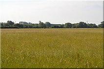 SP4710 : Grassy meadow by N Chadwick