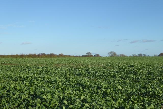 Farmland off Rudgate