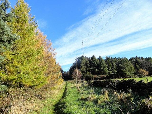 Path at the woodland edge