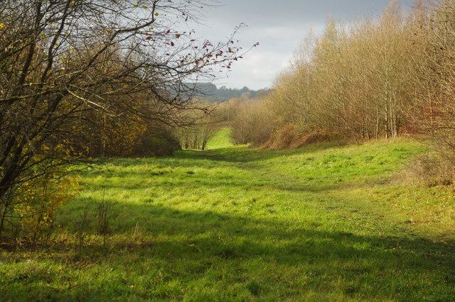 Furzefield Wood