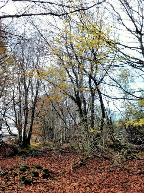 Autumn leaves in Denwood