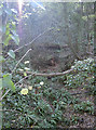 ST5068 : The combe lined with fallen trees by Neil Owen