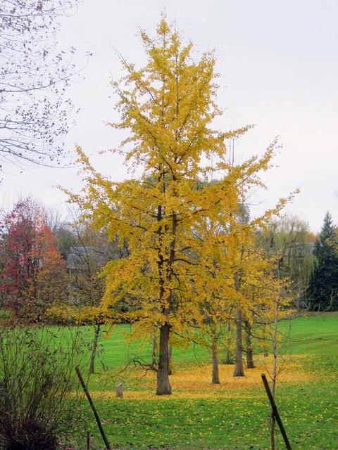 Autumn trees in Egrove Park