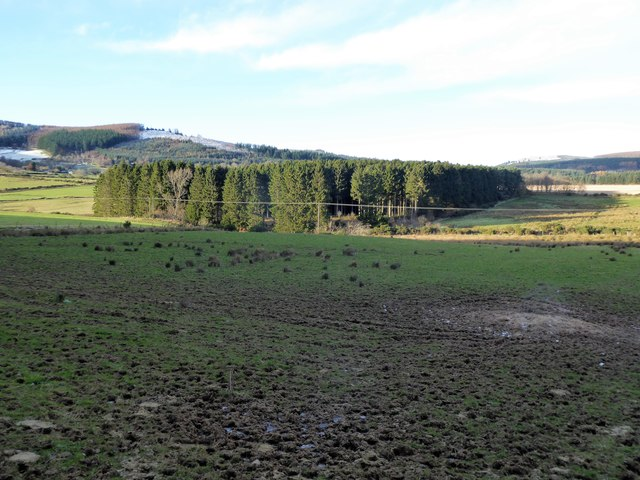 Plantation near Knocklom