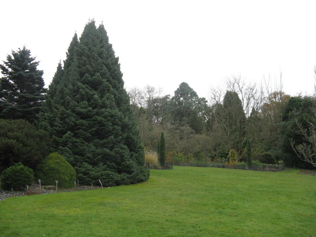 Conifers at Hillier Gardens