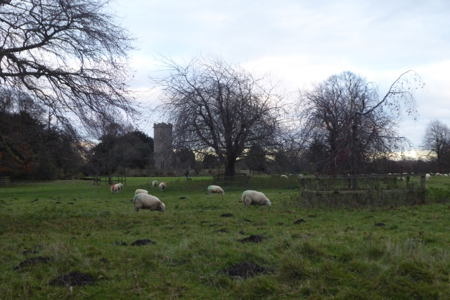 Sheep near Newton Kyme Church