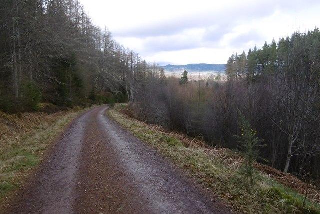 Clash Wood