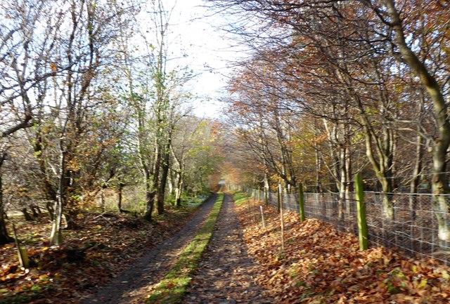 Lane from Hillhead of Lightnot