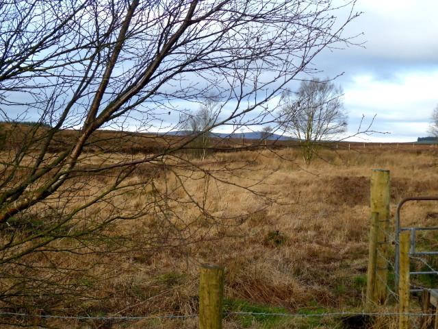 Heathland, Loughmacrory