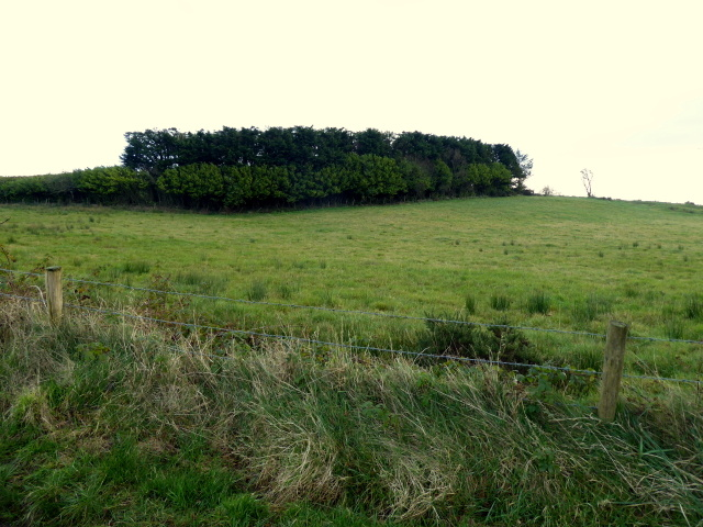 Clump of trees, Loughmacrory