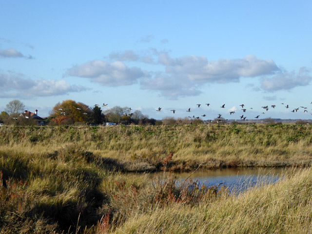 Flight of geese, East Mersea