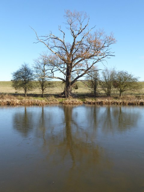 Oak tree reflected in Croome River