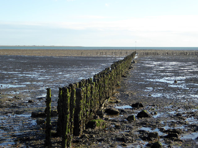 Staked groynes, Mersea Flats