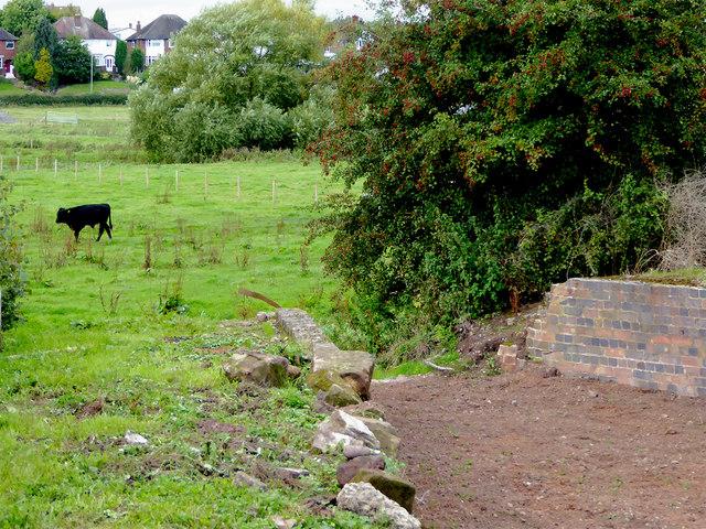 Stafford Riverway Link restoration near Baswich