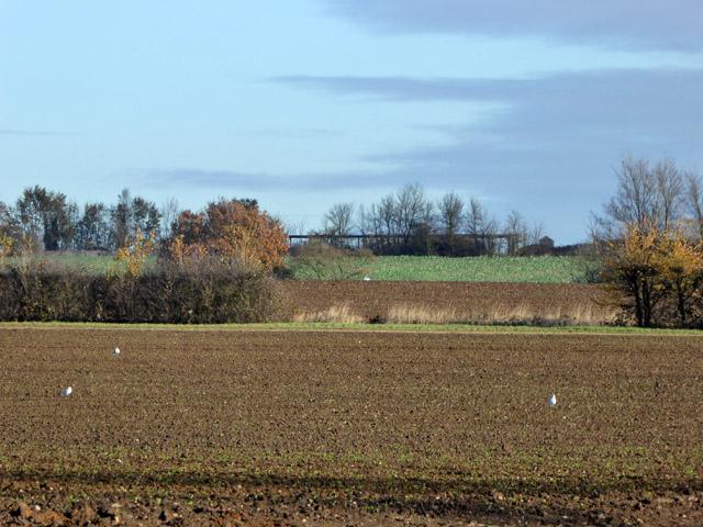 Farmland, Layer Breton