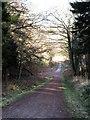 SE6075 : Forest track, Piper Hill by Gordon Hatton