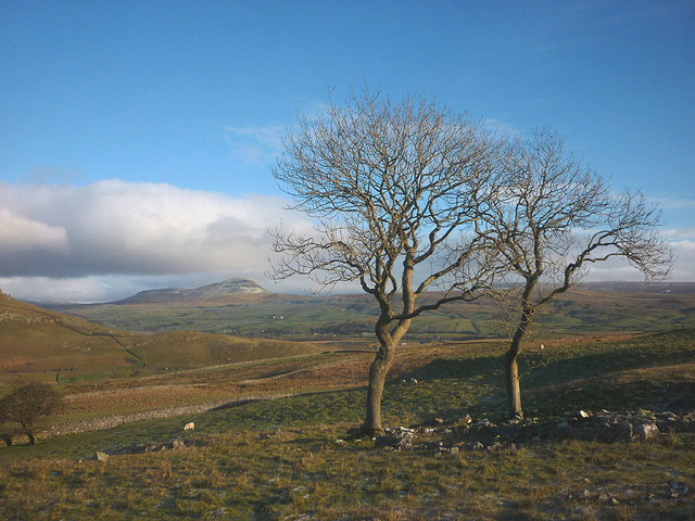 Ash trees north of Pot Scar