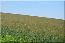 SX4249 : Wheat field by N Chadwick