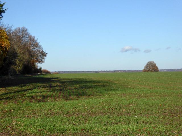 Field, East Mersea