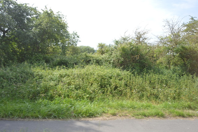 Hedge by the A40