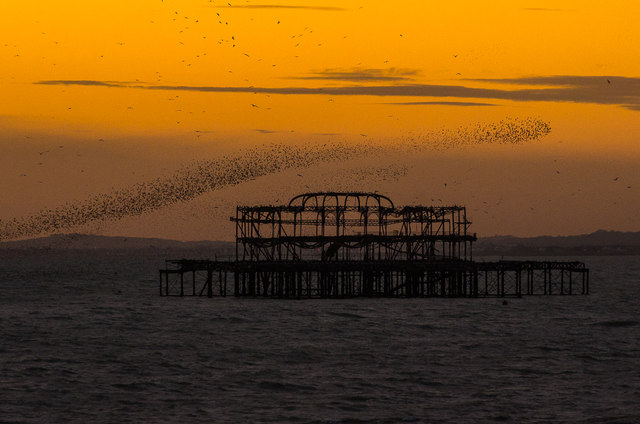 Starlings over West Pier